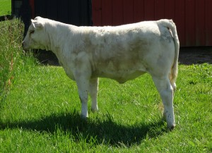Cool Wind daughter just a December baby, Weavers Cool Mary 1651 sold to Sage Revels, Webster, FL